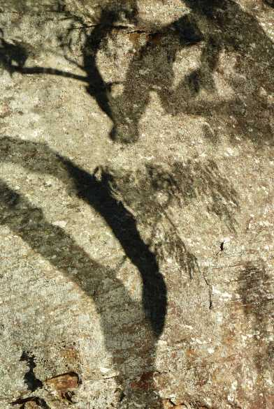 Curious artistic shadows on sandstone